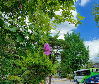 A shuttle bus over the hibiscus